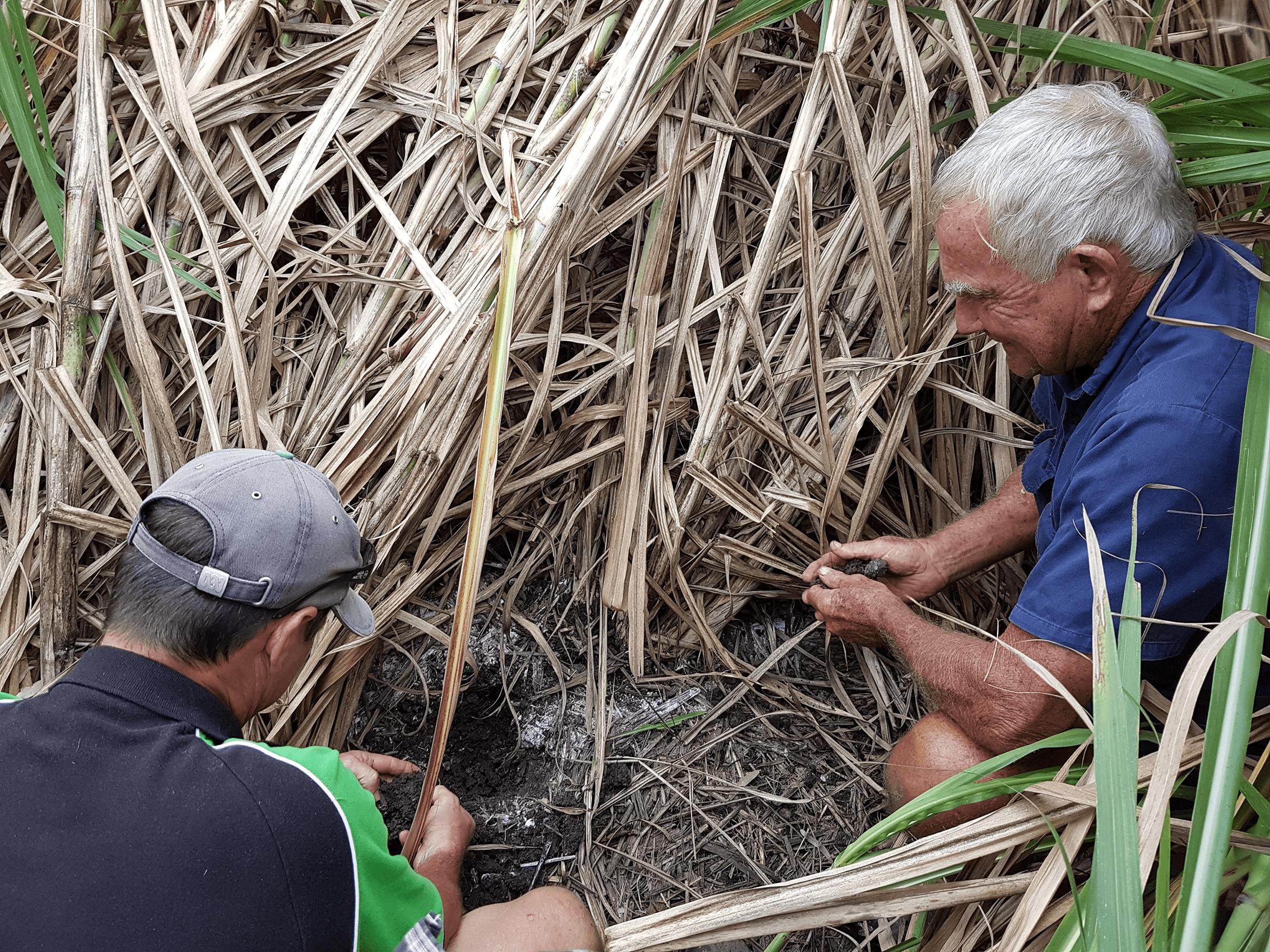 Checking soil on sugar cane farm in QLD